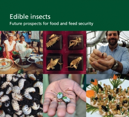Edible insects Future prospects for food and feed security